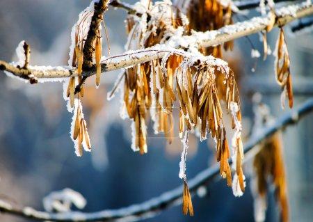 Photo pour Neige hiver dans le parc public de la ville. Branches d'arbres congelées. Concept saisonnier . - image libre de droit