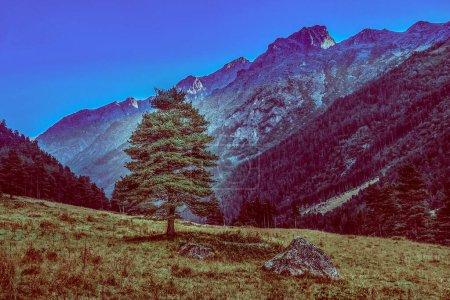 Paisaje de montaña con árboles verdes y hierba. naturales