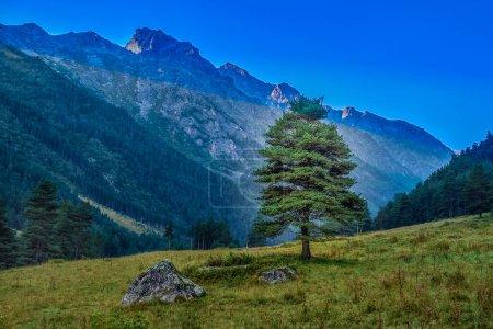 Paisaje de montaña con árboles verdes y hierba. Nadie.