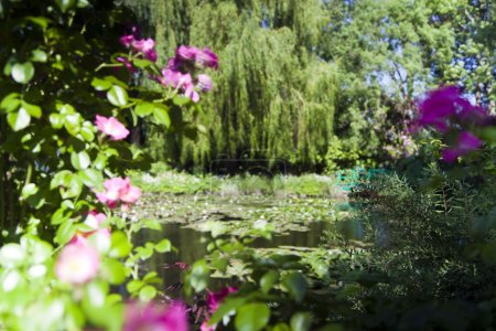 Trees and bushes with flowers around the lake with water lilies