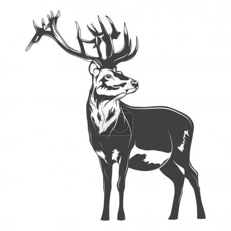 Illustration pour Cerf monochrome sur fond blanc. Illustration vectorielle EPS8 - image libre de droit