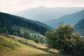 Beautiful rural landscape Carpathian field and grass