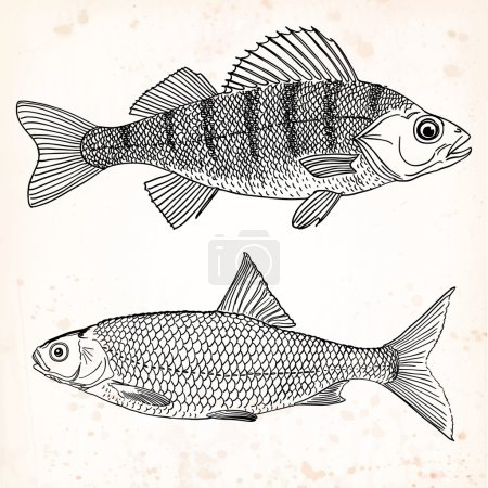 A set of two freshwater edible fishes - a freshwat...