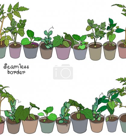 Seedlings and potted plants