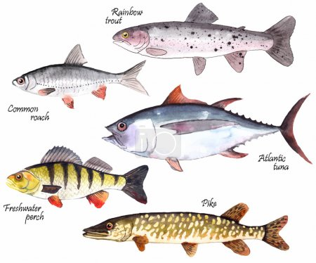 A set of watercolor fishes