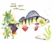 watercolor illustration of a fish