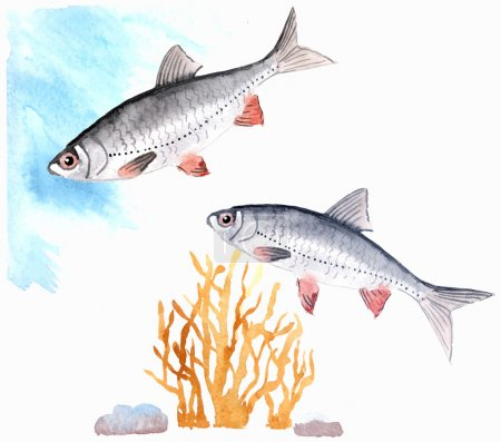 Hand-painted watercolor illustration of freshwater...