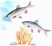 watercolor freshwater fishes