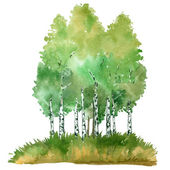 summer Birch groove