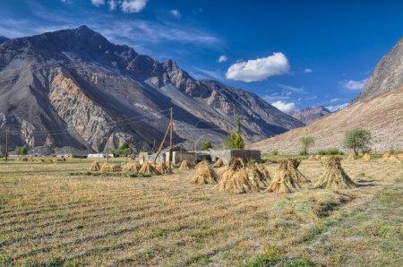 Cultivos en Tayikistán