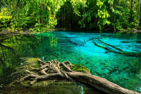 Emerald blue Pool. Krabi, Thailand. Amazing blue water in the be