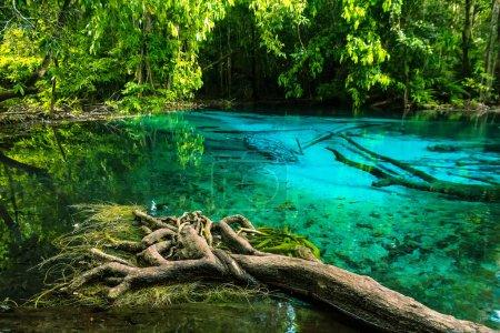 Photo pour Piscine bleu émeraude. Krabi Town, Thaïlande. Eau bleue incroyable dans le magnifique lac à la forêt - image libre de droit