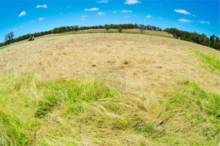 Australian rural field landscape with haystacks and blue sky. Fish eye lense