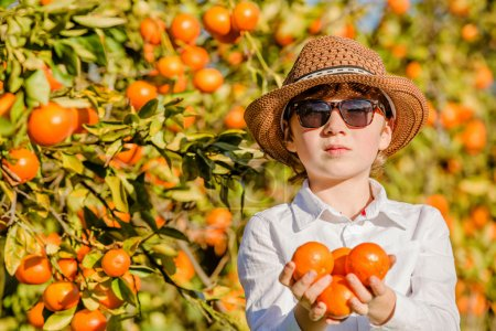 Portrait of attractive cute young boy holding mandarins at citrus farm on sunny summer day