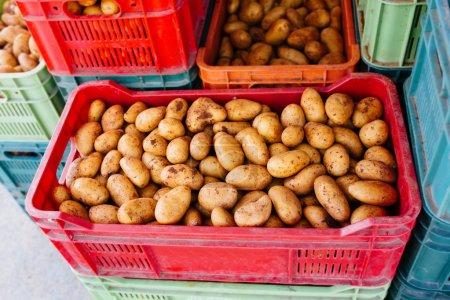 Photo pour Pommes de terre crues récoltées dans des boîtes en plastique à un marché - image libre de droit