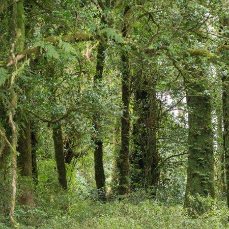 Photo pour Paysage de jungle verte avec la forêt de pluie - image libre de droit