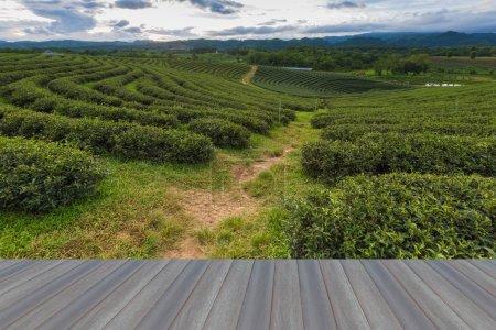 Opening wooden floor of Tea plantation