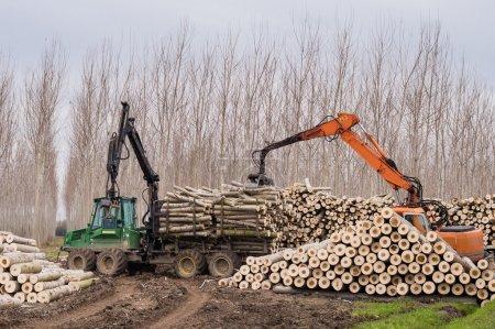 Photo pour Coupe de peupliers, journal des grues et des piles de bois - image libre de droit