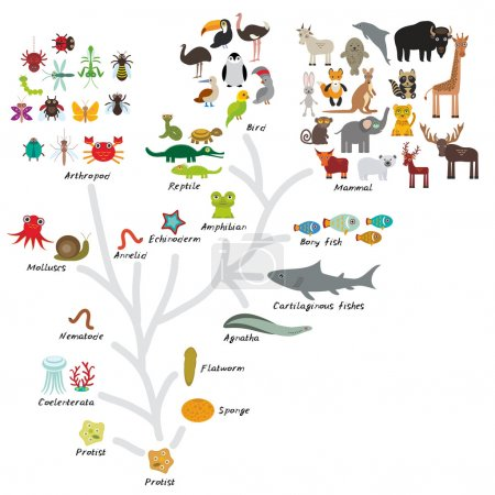 Evolution in biology, scheme evolution of animals isolated on white background. children's education, science. Evolution scale from unicellular organism to mammals. Vector