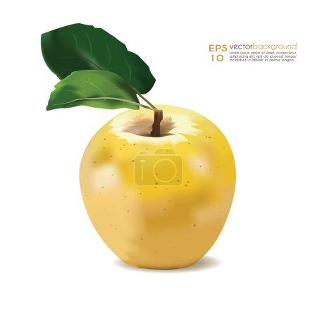 Yellow golden apple vector illustration.