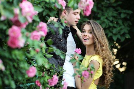 Delightful woman and man embraces near rose bush