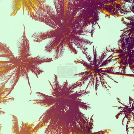 Photo for Palm trees against blue sky background - Royalty Free Image