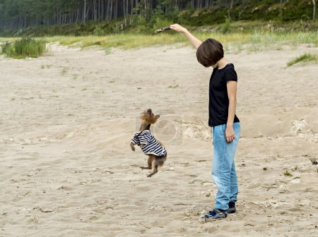 Happy girl and dog are playing at sandy beach...