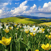 Beautiful spring landscape with daffodils against the sky with c