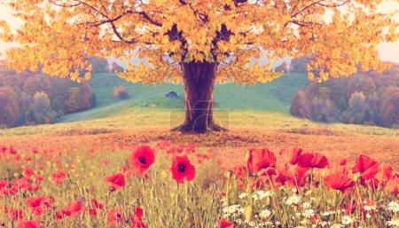 Photo pour Beau paysage avec des fleurs de pavot et un seul arbre avec un feuillage jaune d'automne dans les montagnes aux couleurs pastel. Effet Instehram. (fond naturel ) - image libre de droit