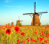 Magic landscape with a field of poppies and wind Mills on a sunn