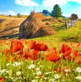 The charming landscape with poppies and daisies on a background