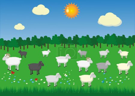 Sheeps and rams in pasture with summer sun