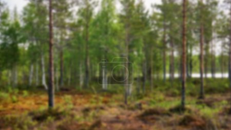 Photo for Finnish taiga in summer  intentionally blurred - Royalty Free Image