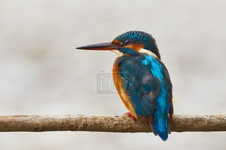 colorful kingfisher perched on a branch