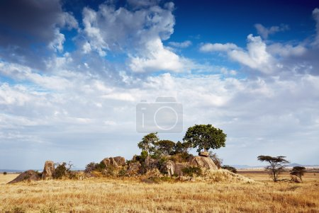 Photo pour Beau paysage africain, les Gol kopjes dans le parc national du Serengeti, Tanzanie - image libre de droit