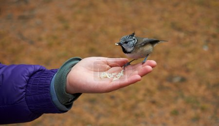 Photo for Little bird eats confident by the hand of a child - Royalty Free Image