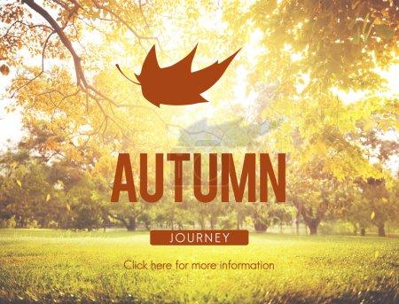 Autumn Fall Foliage Concept