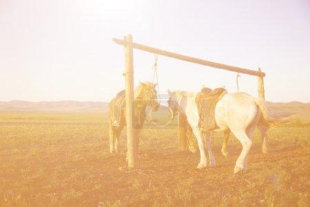 beautiful sunset and horses
