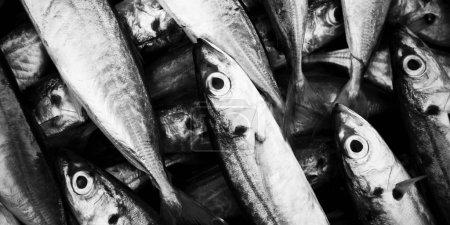 School Of Fish Concept