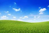 Zelené trávě hill a jasné modré nebe
