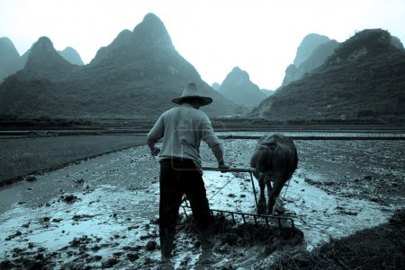 Traditional Preparing Rice in China