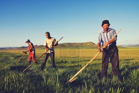 Mongolian Farmers Working