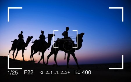 Photography Focus camels