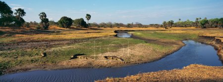 crocodile in tanzania