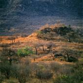 Namibian savannah landscape