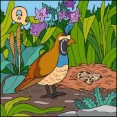 Color alphabet for children: letter Q (quail