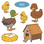 Set of cute farm animals and objects vector family duck colori