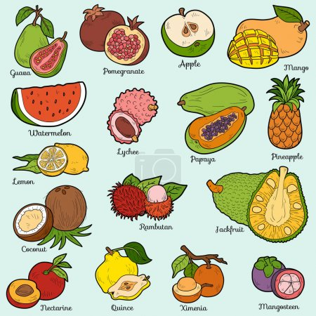 Illustration for Color set with tropical fruits, vector cartoon stickers for children - Royalty Free Image