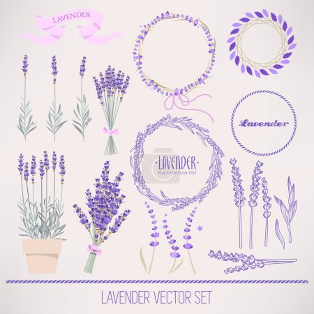 Illustration for Set of lavender flowers and flower compositions - Royalty Free Image