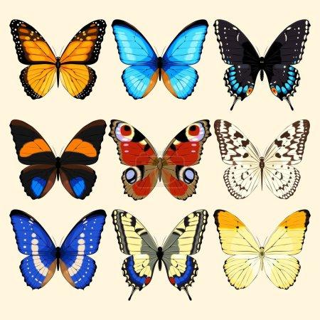 Illustration pour Collecte vectorielle de papillons réalistes et détaillés - image libre de droit